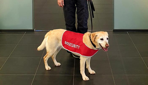 Detector dog in place to help protect Territory's border