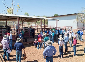 Livestock research shared at Victoria River Research Station