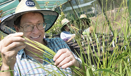 Native rice trials begin in a $1.4 million project