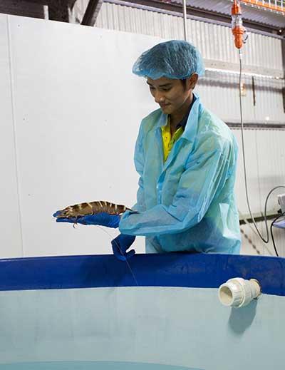 Technician holding a prawn