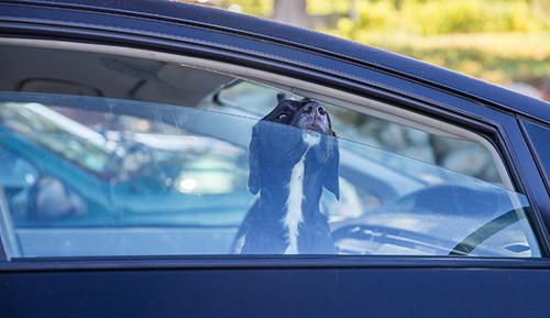Don't let your dog overheat in your car