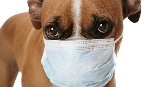 Dog with safety mask