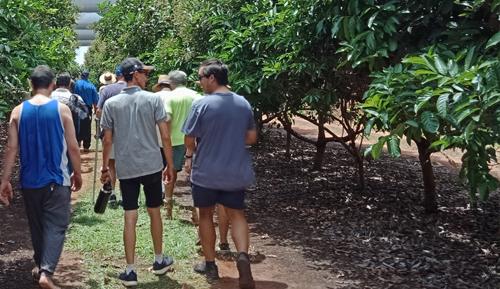 Rambutan field walk