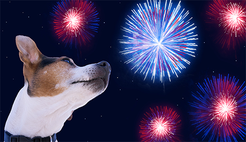 Fireworks are for people, not pets!