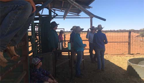 Take stock: knowledge is power in Central Australia