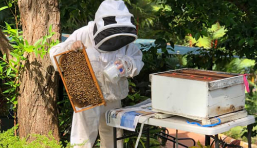Protecting bees to protect plants