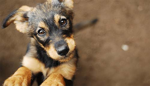 Last chance to apply for an Animal Welfare Fund grant