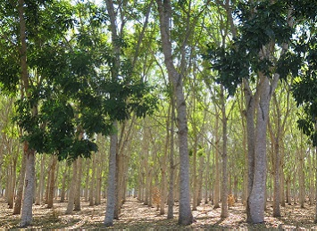 New project could help grow NT forestry
