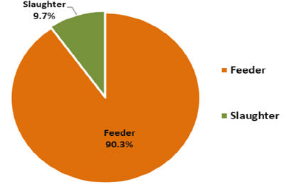 Pie graph live cattle and buffalo exports by type