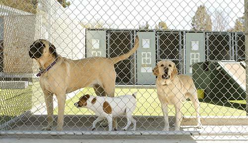 Three dogs in boarding kennel