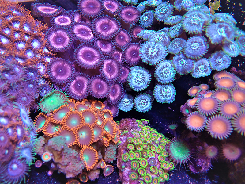 Image of tropical coral.
