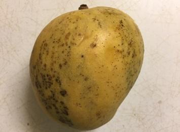 Step closer to understanding mango disorder