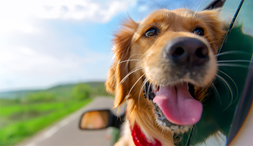 Considering a road-trip with your pooch?