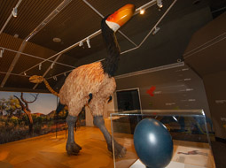 One of the Megafauna animals and an egg on display at Megafauna Central in Alice Springs