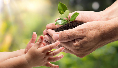 Adult hand holding new plant with child hand reaching