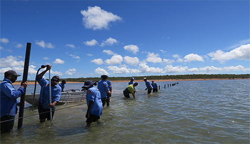 Keeping tropical oyster farming on track