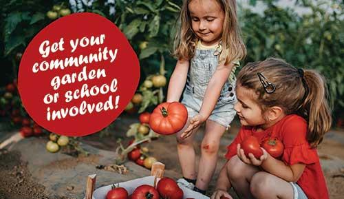 Help keep the Territory free of tomato potato psyllid bugs!